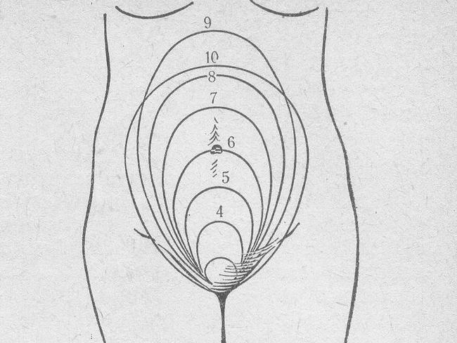 Схема матки при беременности рисунок